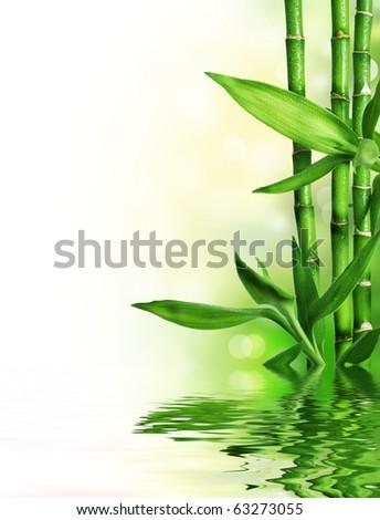 Bamboo border - stock photo
