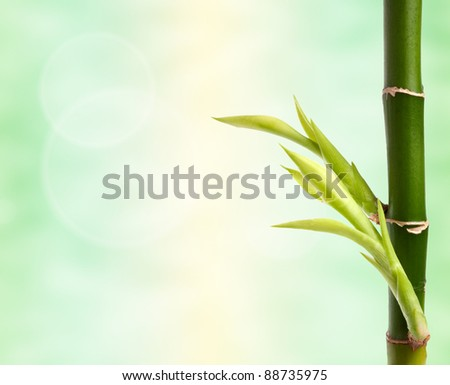 bamboo branch over abstract background