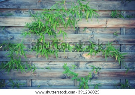 bamboo branches over wooden background - stock photo