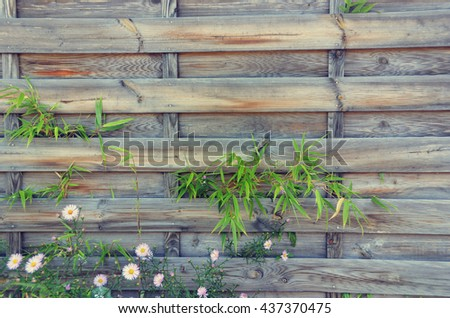 Bamboo branches over wooden background
