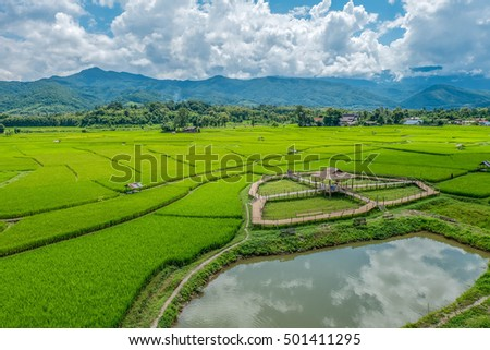 Bamboo bridge on green rice field with nature and blue sky background
