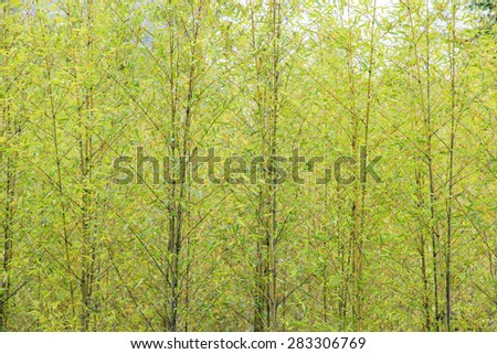 Bamboo for adv or others purpose use - stock photo