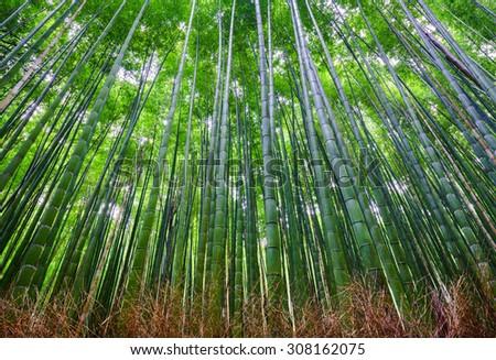 Bamboo forest, Arashiyama, Kyoto, Japan - stock photo