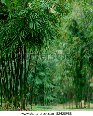 Bamboo forest at the side with defocused background - stock photo