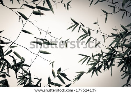 Bamboo forest background in black and white tone - stock photo