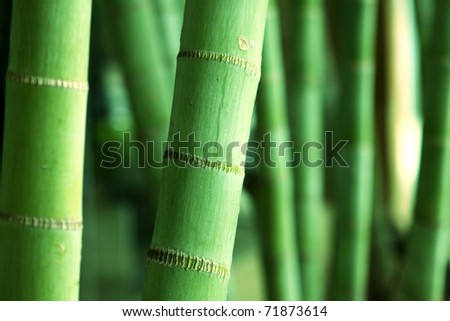 Bamboo Forest close up at day - stock photo