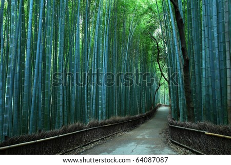 Bamboo forest in KYOTO JAPAN
