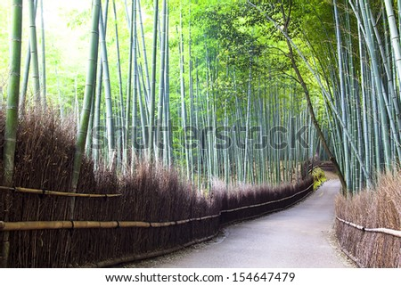 Bamboo forest in Kyoto, Japan for adv or others purpose use - stock photo