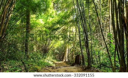 Bamboo forest in rainy season - stock photo