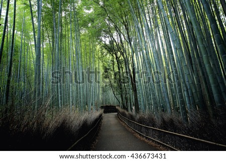 Bamboo Forest  , Japanese Bamboo in Kyoto - stock photo