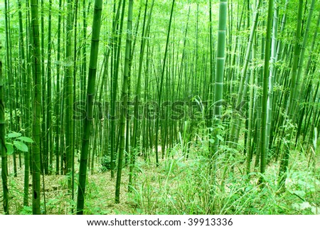Bamboo forest, natural green background - stock photo