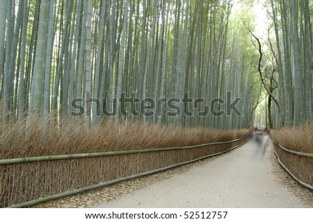 Bamboo forest of tourist spot of Kyoto