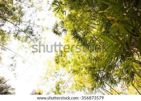 Bamboo forest, Thailand - stock photo