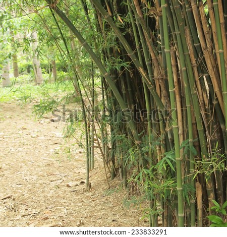 Bamboo forest. Trees background inside tropical jungle - stock photo