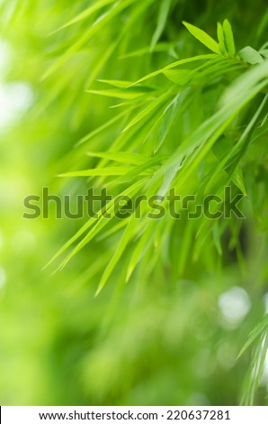 bamboo forest with ray of lights and water reflections - stock photo