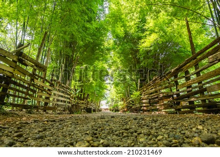 bamboo forest with walking trail. - stock photo