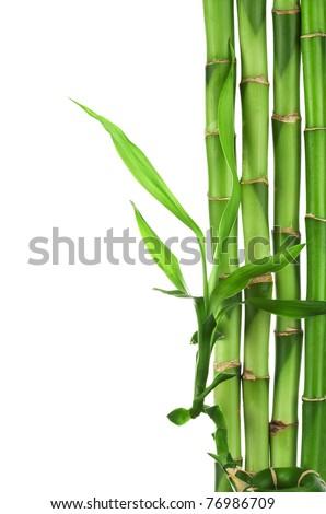 bamboo frame isolated - stock photo