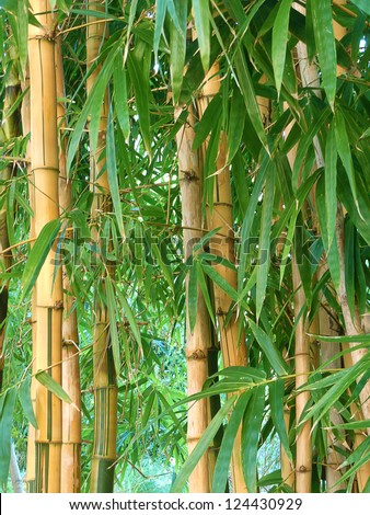 bamboo garden - stock photo