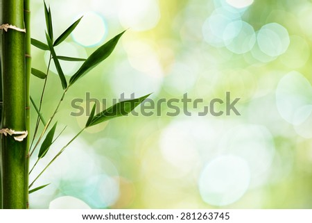 Bamboo grass against green backgrounds with beauty bokeh - stock photo
