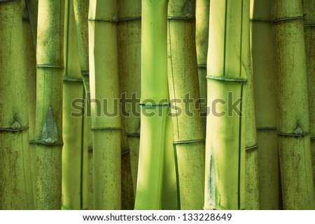 Bamboo green forest background - stock photo