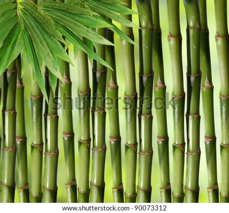 Bamboo green plant stems background with slight inward perspective over black - stock photo