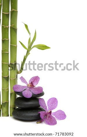 bamboo grove and branch orchid on pebble - stock photo