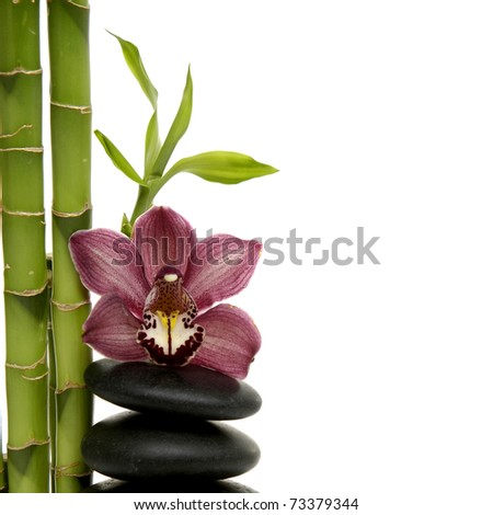 bamboo grove and branch orchid on stacked stones - stock photo