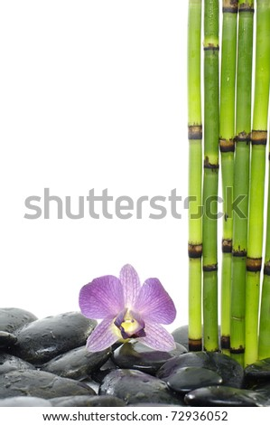 bamboo grove and pink orchid on pebble - stock photo