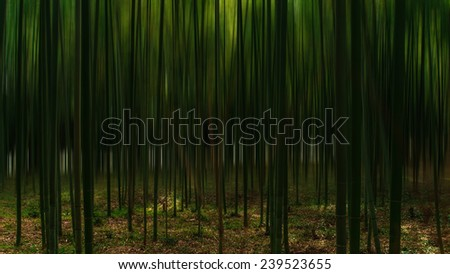 Bamboo grove / fresh and contrasting shades of green in a dense bamboo grove. shallow depth of field. - stock photo