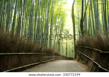 Bamboo Grove in Arashiyama, Kyoto, Japan - stock photo