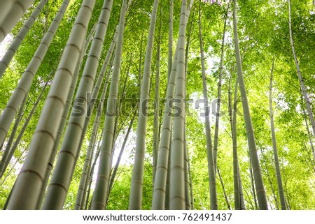 https://thumb7.shutterstock.com/display_pic_with_logo/167494286/762491437/stock-photo-bamboo-grove-in-japan-762491437.jpg