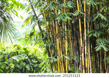 bamboo grove in the jungles of the Philippines - stock photo