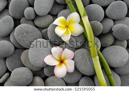 bamboo grove with frangipani on gray stones