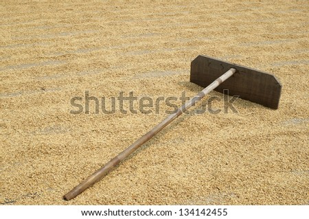 bamboo harrow on rice grain. - stock photo