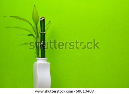 Bamboo in the white vase with green background.