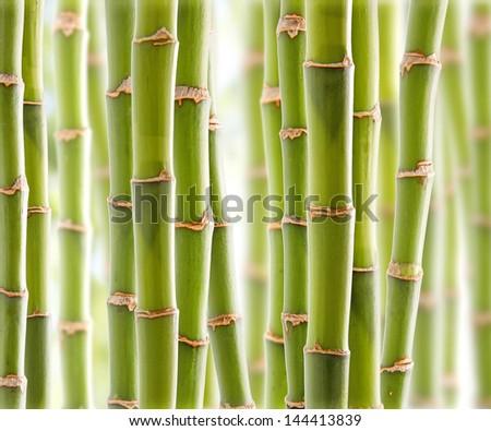 Bamboo Jungle - stock photo