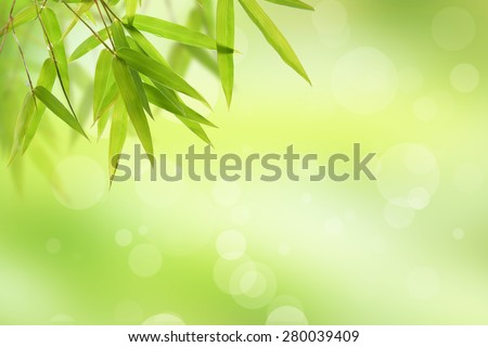 bamboo leaf and abstract green background bokeh - stock photo