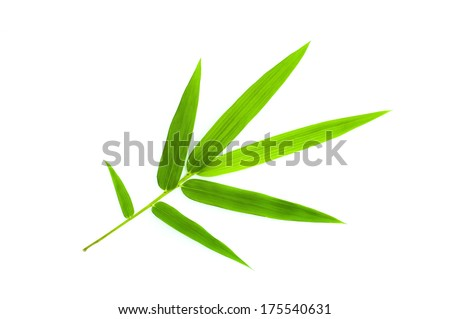 Bamboo leaf isolate on white - stock photo
