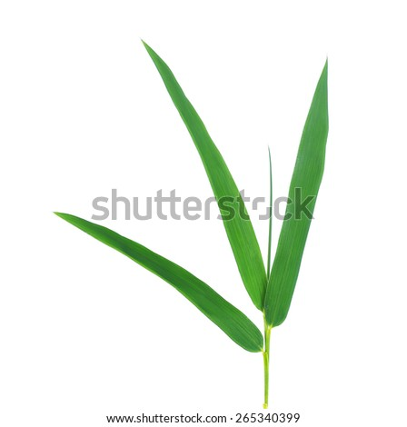 Bamboo leaf isolate on white background.