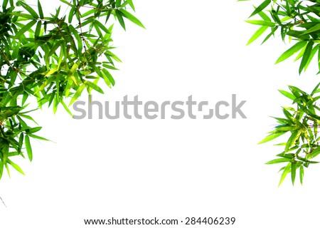 Bamboo leaf on light - stock photo