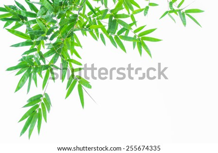 bamboo leaf on white background