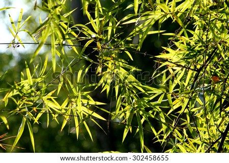 Bamboo leaf texture - stock photo