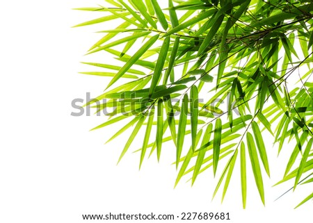 Bamboo leave on white background - stock photo