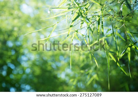 Bamboo leaves background . - stock photo
