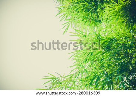 bamboo leaves background - stock photo
