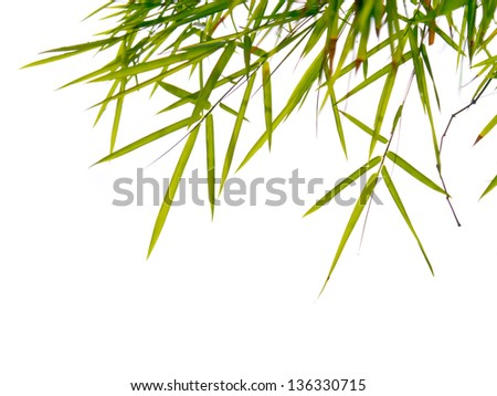 Bamboo leaves background with clouds.