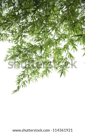 bamboo leaves collection on white background