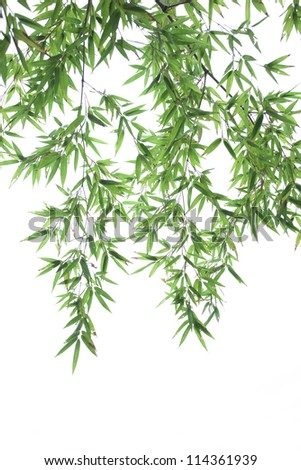 bamboo leaves collection on white background - stock photo