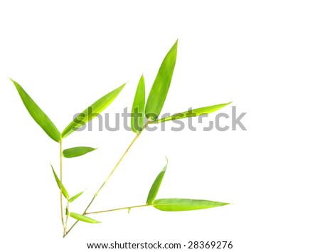 Bamboo leaves in white background