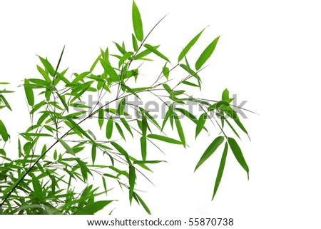 bamboo leaves isolated on a white background - stock photo